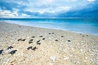 オーストラリアにウミガメシーズン到来!