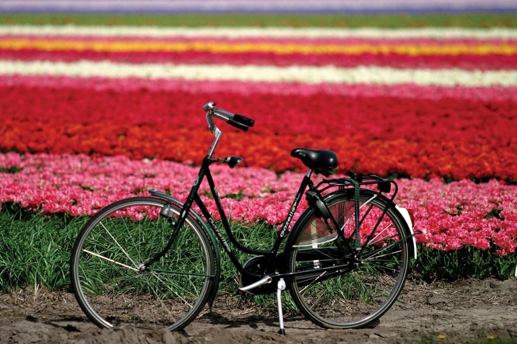 「オランダ ~ ベルギー・フランダース in 東京散走 2014」 開催