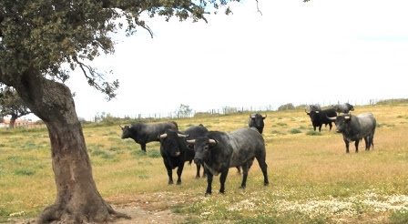 闘牛文化を体験するなら「ザ・フィエスタ」