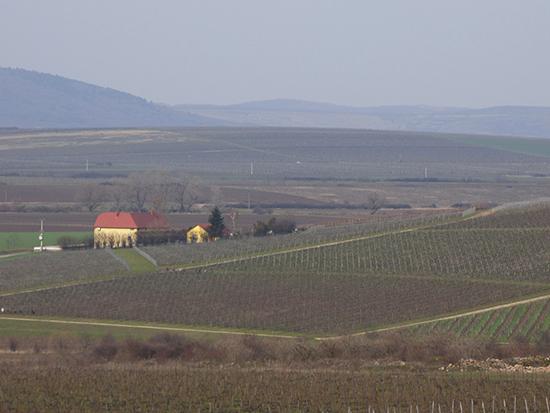 トカイのワイン畑