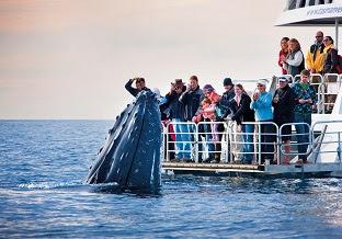 近すぎちゃってどうしよう!クジラを見るならやっぱりハービーベイ!