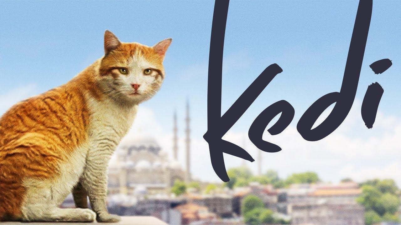 ネコ目線で人間模様を描いた米土合作映画「Kedi」が日本にやって来る!
