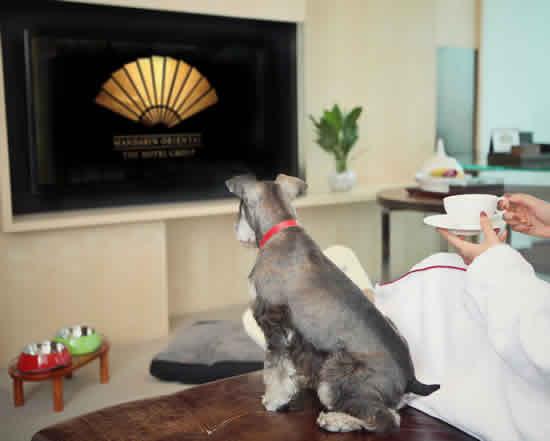 ペットとラグジュアリーなホテルに滞在!マンダリン オリエンタルの「Pet-friendly」プラン