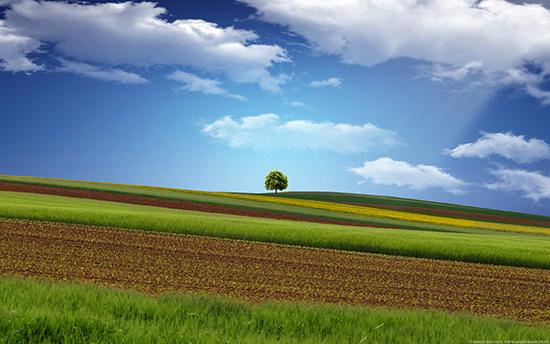 romstr_landschaftbaum