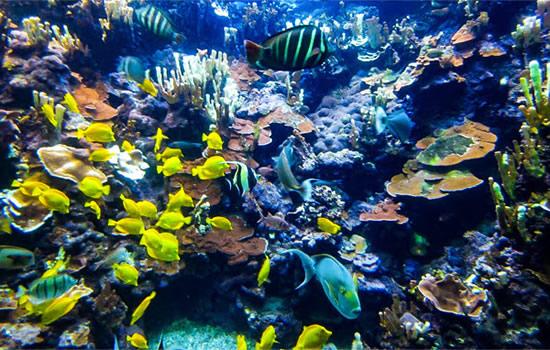 ハワイでサンゴ礁への有害性が指摘される物質を含む日焼け止めの販売を禁止 2021年より施行