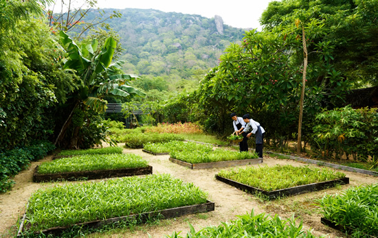 Organic Garden at Six Senses Ninh Van Bay_2