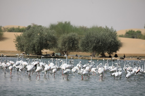 Dubai Ras Al Khor Wildlife Sanctuary