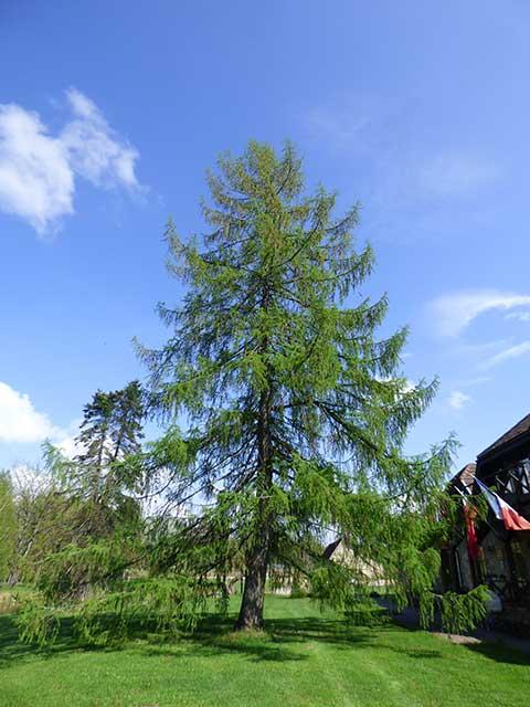 Latvia-Countryside_33