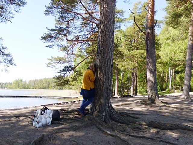 ロホヤの森