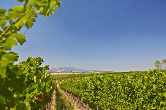 NSW Orange Philip Shaw Wines