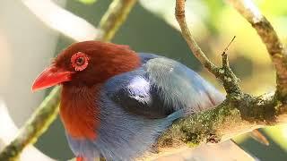 スリランカ大使館がバーチャルエコツアー「ラフラ・ペレーラと行く世界遺産シンハラージャ自然保護区」を主催